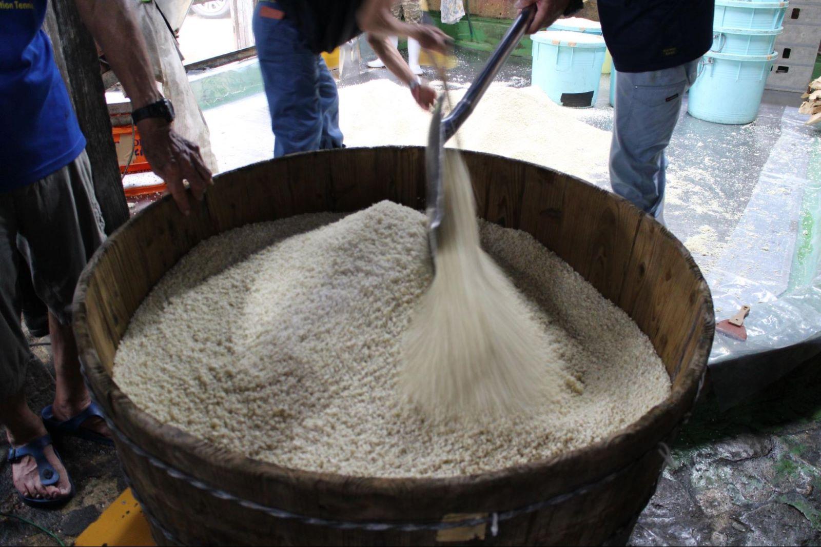 麴部屋で育てられる米麹